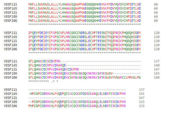Vascular endothelial growth factor VEGF is a good example of a protein where there's many different isoforms.